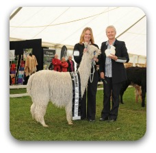 Walkinshaw_Alpaca_Expo_2012_-_pic_b.jpg